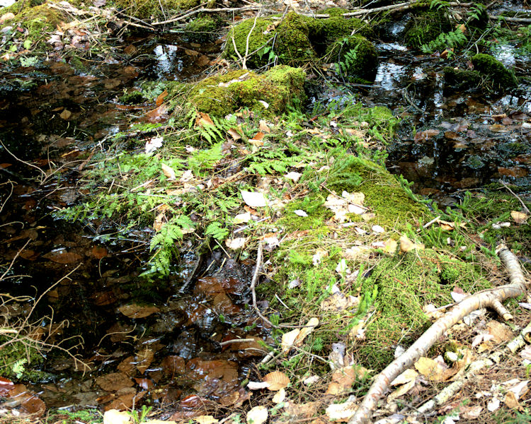 Moss-on-the-forest-floor