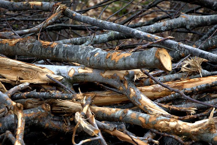 Pile of limbs