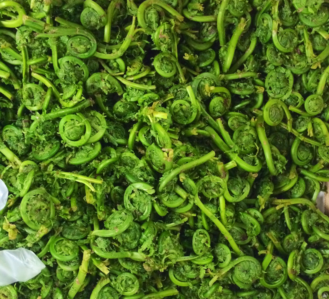 fiddleheads 2014