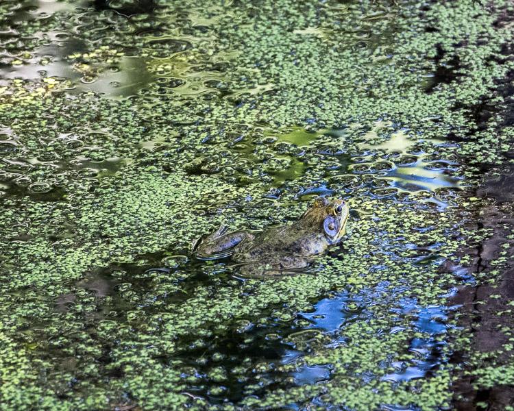 frog man 2 image 459