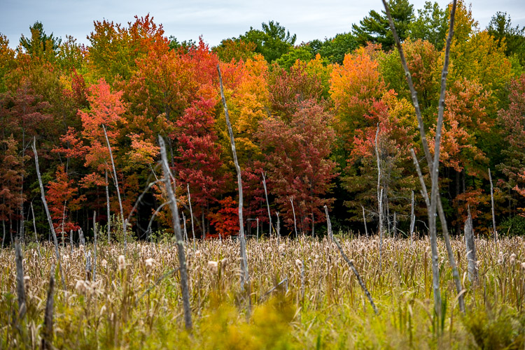 Fall colors on the bog_d81_4173_20161001_845x