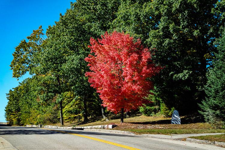 Mt Vernon cemetry tree_20160906_0021z