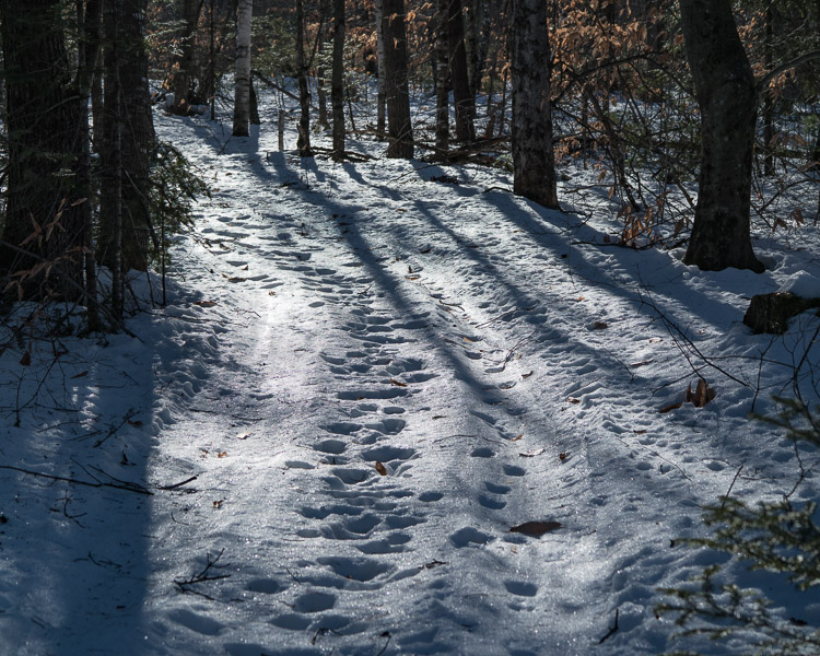 trail_tracks_sam_01172017_0503z