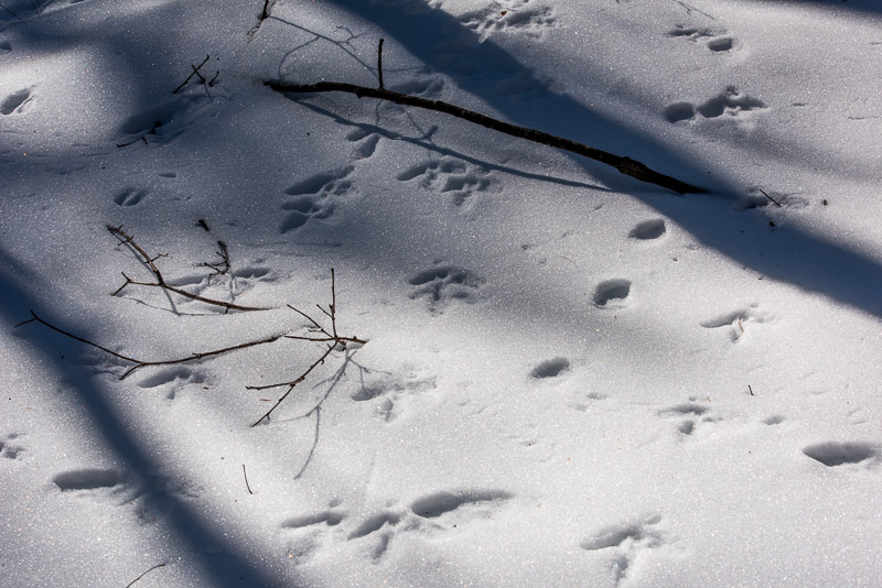tracks_of_snow_d81_4836__170206