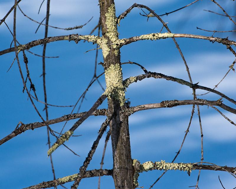 Moss_on_tree_d81_4864__170218