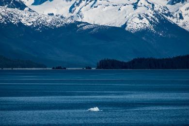 alaska iceberg Endicott arm