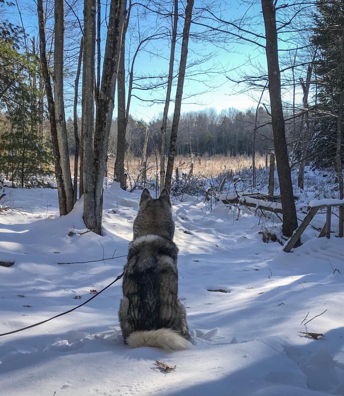 Image winter bog scene 12-17-17